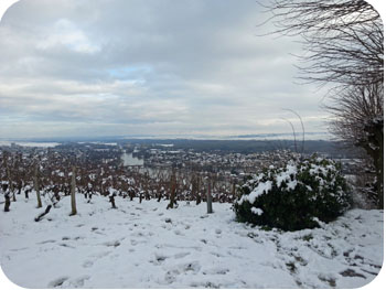 vignes à joigny hiver 2012