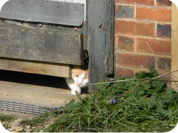 Chat cachée fin printemps 2012