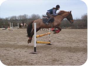 séminaire de cheval equestre